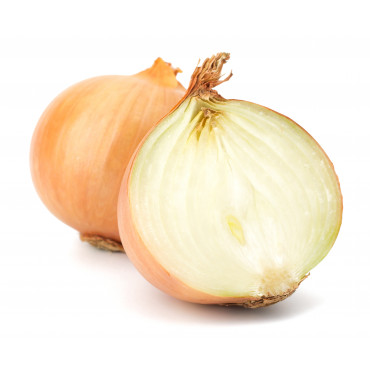 Salatisibul