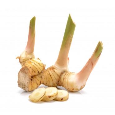 Kalgan/galangali juur