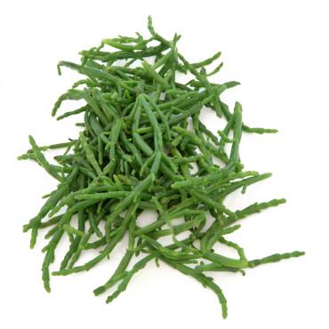 Soolarohi (salicornia)